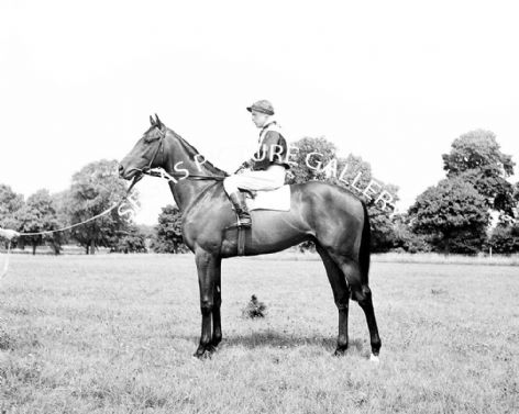 Racehorse Cock of the North with Jockey Walter Cox